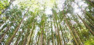 木質資源開発事業のイメージ